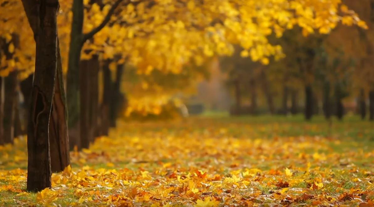 Осень - не причина, чтобы сидеть дома - Стильный Дом
